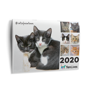 2020-Cat-Calendar-Ten-Lives-Cat-Centre-Fundraising-Calendar