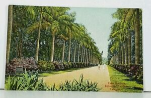 India-Calcutta-Palm-Avenue-Botanical-Gardens-c1910-Postcard-D19