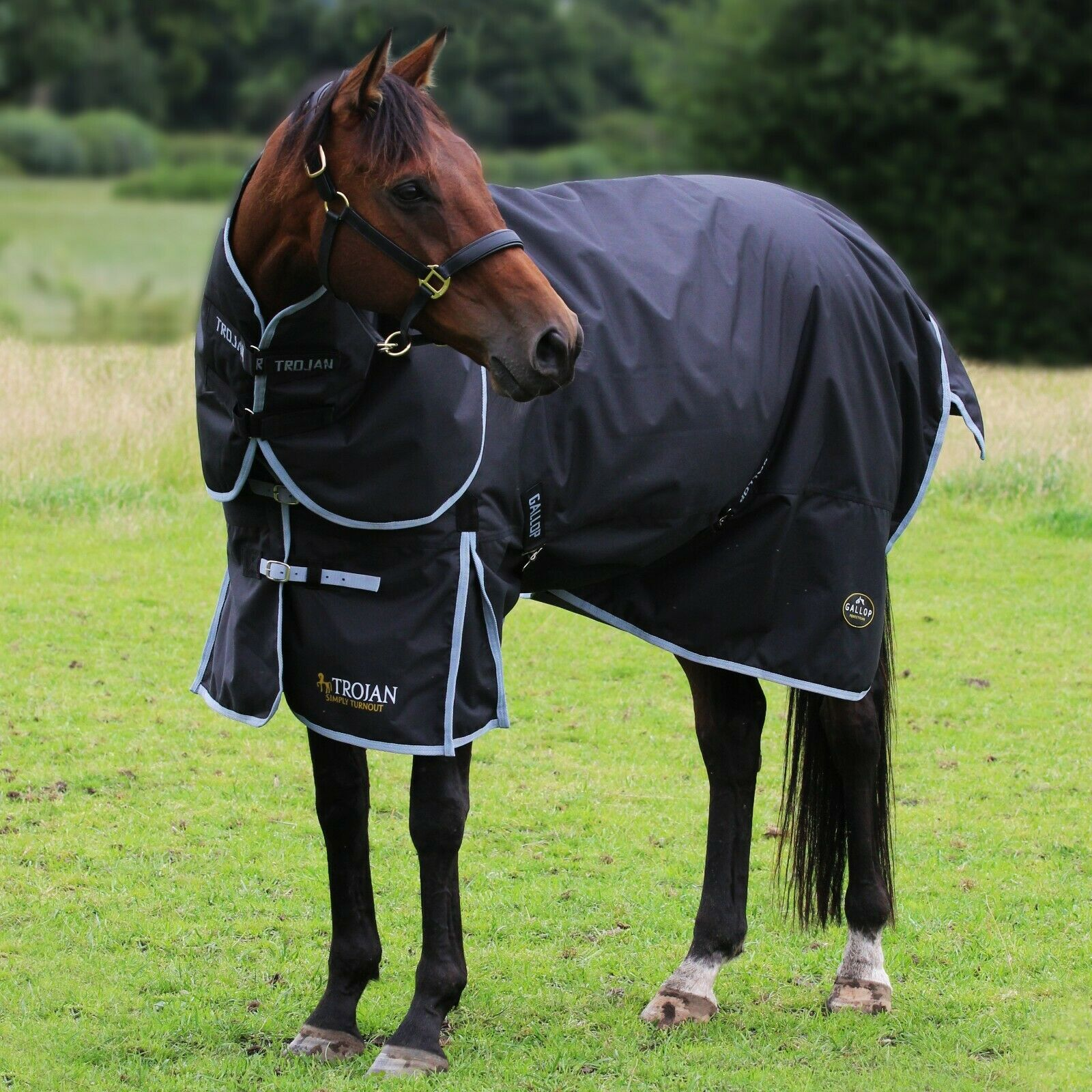Gallop Trojan 300g Heavyweight Horse Turnout Rug and Detachable Neck Set Winter