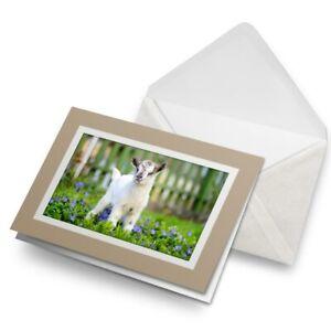 Greetings-Card-Biege-Cute-Little-Baby-Goat-Animals-Farmer-8565
