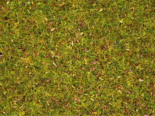 G Z streugras Fleurs Prairie 2,5 mm 20 g encore 08330 TT N h0