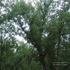 The Magic Place by Julianna Barwick (Vinyl, Feb-2011, Asthmatic Kitty)