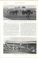 1896 Horse Race Newmarket Sales Pauline Wedlock La Fleche Velasquez Maryland