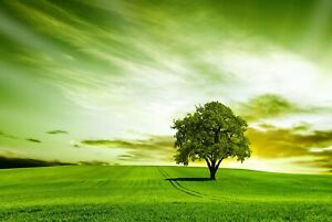 A1-Green-Landscape-Poster-Art-Print-60-x-90cm-180gsm-Tree-Fields-Gift-8264