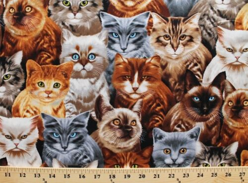 Timeless Treasures Playful Cats Kittens Packed 100/% cotton fabric by the yard