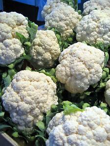 1,000 Cauliflower Seeds Self Blanche Seed 52 days