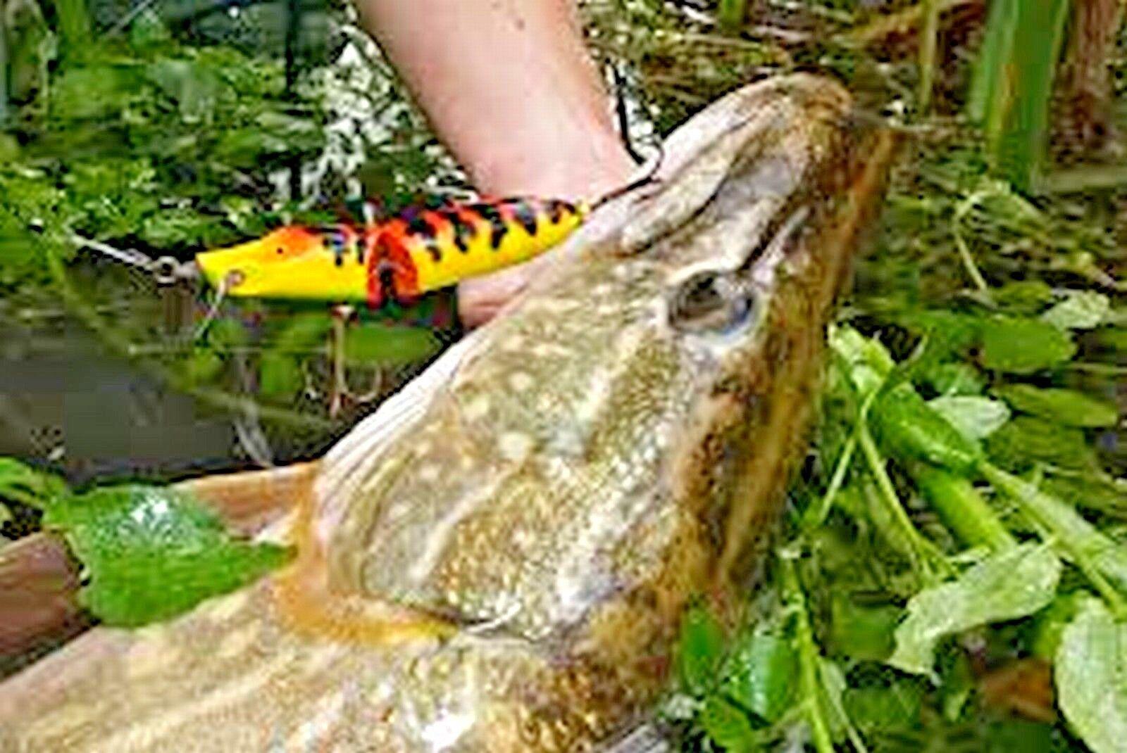 Pike Rod Pike canne à pêche perche Rod Zander  Inclut Bobine envoi gratuit