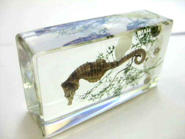 ice bottom dragon,green grass ,shell,stone Specimen (Paperweight) 7.4*4*2cm 83g