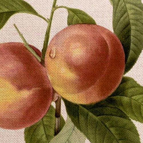 Kissenhülle Kissenbezug Motivkissen botanische Darstellung Pfirsich