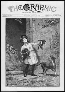 1886-Antique-Print-ILLUSTRATION-Pick-Litter-Stanley-Berkley-Puppies-165