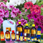 3ml-Essential-Oils-Many-Different-Oils-To-Choose-From-Buy-3-Get-1-Free thumbnail 44