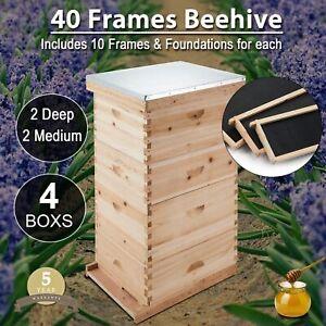 10-Frame Size Beekeeping Kit Bee Hive House Frame//Beehive 10 Deep /& 10 Medium