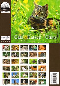 NEU-Postkartenbuch-Katzen-30-Postkarten-Tiere