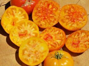 Tomato Non Gmo Heirloom Open Pollinated