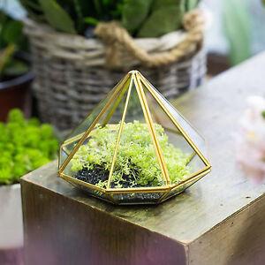 Open Diamond Glass Geometric Terrarium Succulent Fern Moss Tabletop