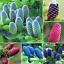 50-Pcs-Graines-coreen-SAPIN-Abies-Koreana-Bonsai-plantes-Accueil-Jardin-Rare-Arbre-Nouveau-C miniature 1