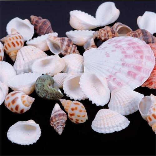 100g Beach Mixed SeaShells Mix Sea Shells Shell Craft SeaShells AquariumDecorS!