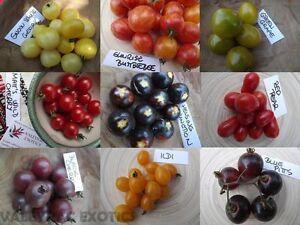Kirschtomaten-Paket-aus-9-Sorten-Cherry-Tomato-45-Samen-AKTION