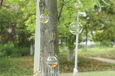 Classic Hanging Glass Ball vase Fish Aquarium Garden Window home decor vase