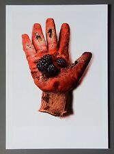 Stuart Heir Ltd. Ed. Photo 17x24cm Glove New York Hanschuh Brombeeren Still Life