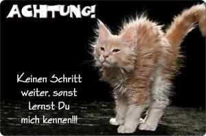MAINE-COON-Katze-A4-Metall-Warnschild-Katzenschild-SCHILD-Tuerschild-MAC-02