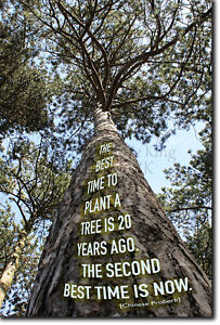 The Best Time To Plant A Tree Quote Poster Photo Print Art