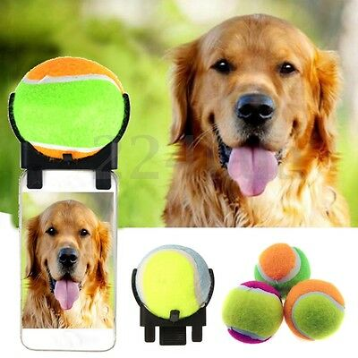 Pet Dog Cat Attachment Tennis Selfie Stick Phone Ball Training Chew Toy Squeaky