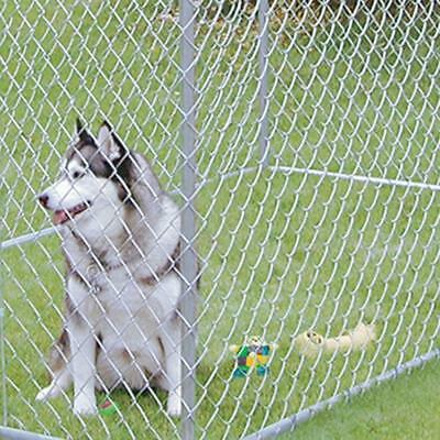 Xxl Outdoor Dog Kennel Large Tall Chain Link Fence Pet Enclosure Run S 724933523107 Ebay