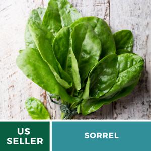 Salad Greens 200 Seeds GMO Free Sorrel Rumex Acetosa Culinary Herb