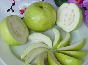 Sweet-Guava-20-Seed-Thai-Tropical-Fruit-Fresh-amp-Viable-Seed-PSIDIUM-GUAJAVA