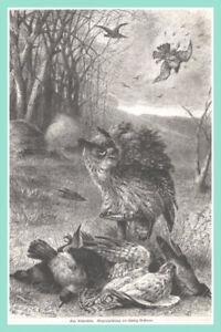 """Orig.holzstich V.1884 ZuverläSsige Leistung Jagd-jäger """"eine Krähenhütte"""" Hüttenjagd Mit Lebenden Uhu Antiquitäten & Kunst"""