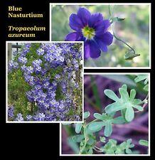 BLUE NASTURTIUM * Tropaeolum azureum * TROPICAL CLIMBING VINE *  SEEDS