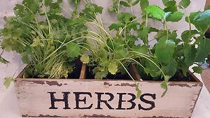 CréAtif Herb Planter Pour Votre Fenêtre Ou Supermarché Herbes. Fabuleux D'affichage. Shabby Chic-afficher Le Titre D'origine