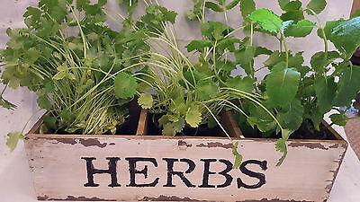 Herb Fioriera Per La Vostra Finestra O Supermercato Erbe. Favoloso Display. Shabby Chic-
