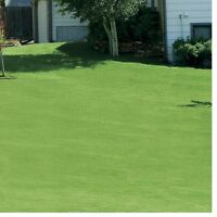 Green Canada Grass Seed, Grows Lawn Thick And Lush As Carpet, Withstands Weather