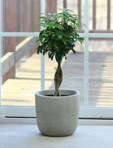 Concrete-Planter-8-Inch-Flower-Pot-Handmade-Home-amp-Garden-Decor-Natural-Gray