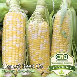 Peaches & Cream Corn Seeds | Non-GMO Hybrid Garden Seeds