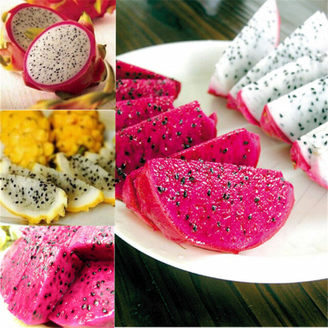 4kinds Mix Pitaya Dragon Fruit Yellow Seed Fragrant Cactus Rare Exotic 200 Seeds