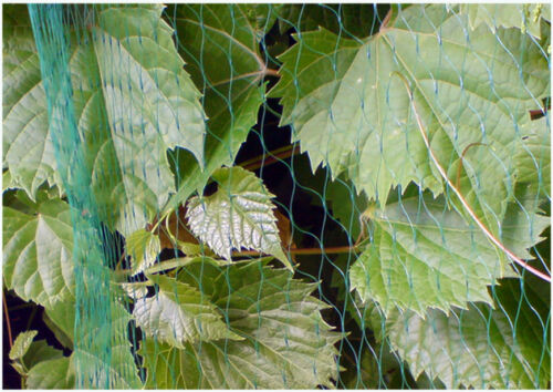 Anti Bird Net Netting Tree Plant Fruit Protection Diamond Mesh 4m Wide 100m Long