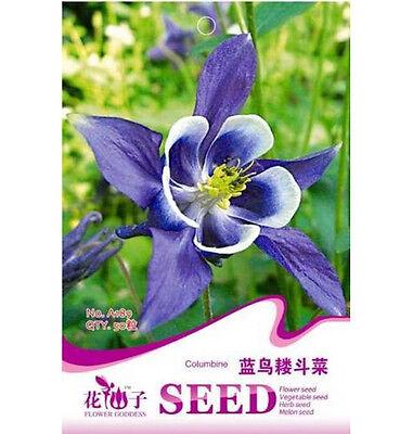 FD1227 Blue Columbine Seed Aquilegia Seed Garden Flower Seeds ~1 Pack 50 Seeds~