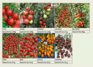 Aus über 60 Sorten Bunter Tomatenmix 40 Samen