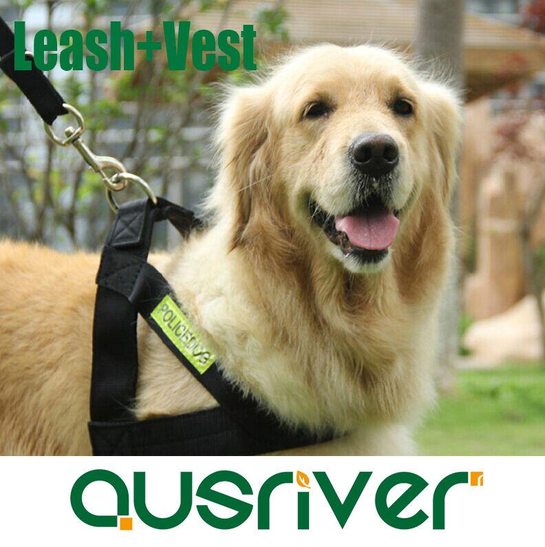 Premium Pet Adjustable Harness Vest With Luminous Leash Comfortable Wear 4 Size