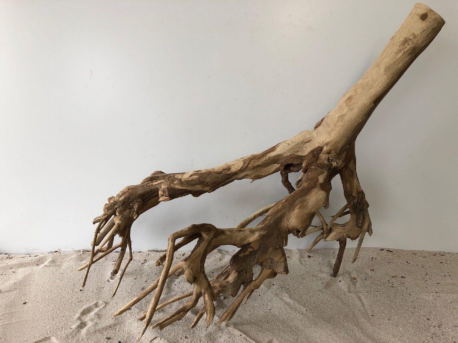 Talawa Wurzel XL ähnlich rote Moorwurzel, Moorkien,Mangrove  1001 63x40x52cm