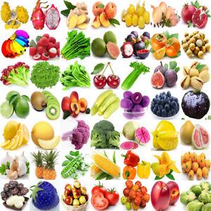 209-Type-Rare-Vegetable-Fruits-Seeds-Home-Garden-Plant-NON-GMO-Survival-Heirloom