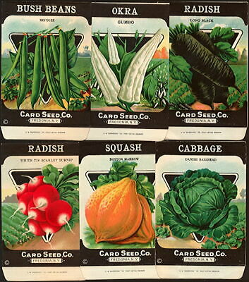 VINTAGE SEED PACKET 1920 GENERAL STORE FREDONIA NEW YORK CABBAGE EARLY WAKEFIELD
