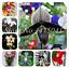 200 PCS Seeds Rare Japanese Monkey Face Orchid Bonsai Plants Multiple 22 Colors