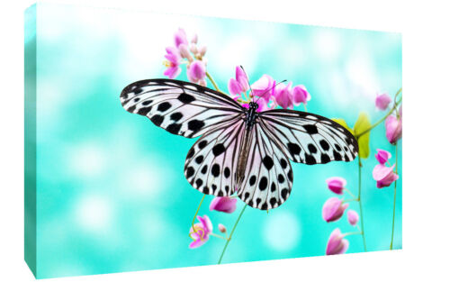 Pink Flowers Floral and Butterfly Canvas Wall Art Picture Ready to Hang