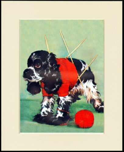 COCKER SPANIEL HAS KNITTING PROBLEM COMIC DOG PRINT MOUNTED READY TO FRAME