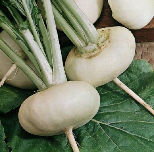 Ca Rübe Weiß Milan 4000 Samen Gemüse//Früchte