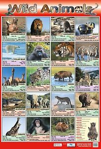 wild animals poster educational learning nature wildlife